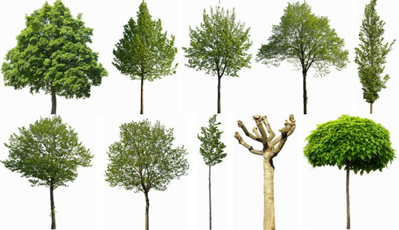 Xoio air 10 free cutout trees from tony textures xoio air - Tree images free download ...